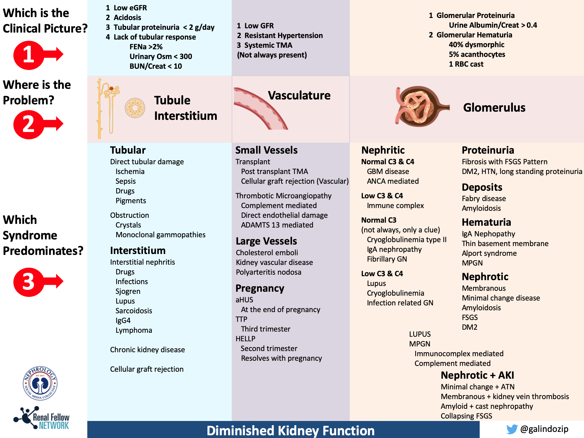A Guide To Compartmentalize The Etiologies Of Kidney Disease The Kidney Syndromes Renal Fellow Network
